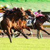 第68回 神戸新聞杯(GⅡ)◆◆重賞1点予想◆◆