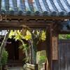 太山寺 安養院 #1