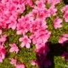 「高嶺の花」第5話を観て