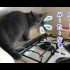 噛み猫を回避する裏技