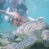 ダイバーの聖地アポ島でウミガメと泳いできた!|フィリピンネグロス島旅行記①