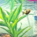 金魚メダカにアクアリウムと流木噺し