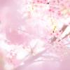 3/7 河津桜の撮影会をしました