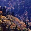 京都北山 ― 芦生の森の奥深く