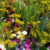 盆花市と新潟の盆花のススキ