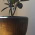 観葉植物と鉢を選ぶポイント