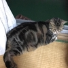 コロナ禍での海外移住⑧:ミッション発令!猫の身長と体重を計測せよ