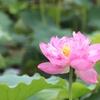 4月8日は「花祭り」 お釈迦様が生まれた日です。 ~断酒宣言から18日