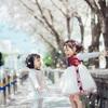 桜の花の雪化粧