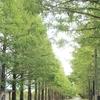 琵琶湖の秋を愉しむ
