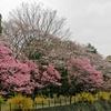昭和記念公園の春の花と小鳥たち。11歳児撮影。