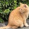 護国寺での猫撮影アゲイン〜その1