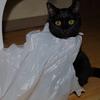 今日の黒猫モモ&白黒猫ナナの動画ー586