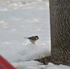 早朝探鳥、武蔵野公園の野鳥/2018-1-30