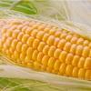 【とうもろこし徹底解析!】栄養価、美容効果、選び方、保存法は??