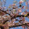 パオと桜と青空と