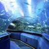 クアラルンプール随一の水族館アクエリアKLCC(Aquaria)で楽しむ