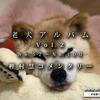 【移動しました】老犬アルバムVol.2:樫村慧コメンタリー Complete  ~これからもっと、愛おしくなるんだよ!~