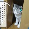 猫に有害な食品類 ~ネギ科の食品~