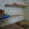 猫さんは座布団がお好き