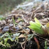 ◆'19/03/02      高館山…春の気配①