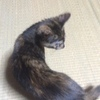 キタ - .∵・(゚∀゚)・∵. - ッ!!