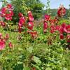 *[長崎日記]わが家の庭は花盛り、旅にも出たいのだが....