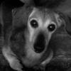 311、震災の日に思う事 Complete ~愛犬を連れての避難、考えてみよう~