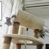 猫の道具 ~王様席に行きたい~