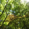 新緑の植物園へお越しください(^^♪
