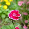 2021年6月30日 お花の色や形が神秘的