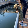 水族館深い。「ホッキョクグマ」から自分の傲慢さを知る、そしてまた考える。