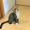 和歌山県橋本市の多頭飼育崩壊