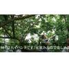 8日(土)より伊豆月ヶ瀬梅林で観光梅狩りが始まります