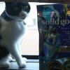 今日の黒猫モモ&ハチワレ猫ナナー1048