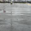 ゲリラ豪雨の予兆と対策