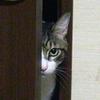 ドアの影から