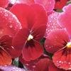 庭の花の写真を撮ってみました