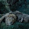 映画「ライオンキング(実写版)」4DXネタバレあり感想解説 4DXで観ても心配ないさぁぁぁぁぁ!!!