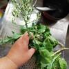 レタスの花でスープを作る