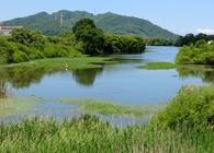 池めぐり三十余年。全国七千の水辺をめぐった私の「池の沼」を語ろう