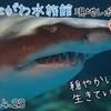 【レポ#22】半年ぶりの水族館!しながわ水族館現地レポート(2021/4/23)【後編】