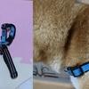柴犬の散歩用にPetsafeデラックスイージーウォークハーネスを購入したのでレビュー