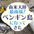アルゼンチン旅行記①ビーグル水道ペンギン島クルーズツアーの感想