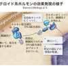 【医学部編入】生命科学講義・シグナル伝達① ~総論・細胞内受容体~
