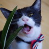 今日の黒猫モモ&白黒猫ナナの動画ー778