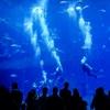 【ドバイ旅行記】水族館の巨大水槽でダイビングしました!