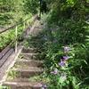 鎌倉散策、トレイルへも