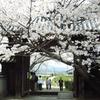 橘寺の桜(3月下旬~4月上旬)