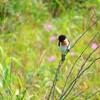 石狩浜(はまなすの丘公園)は潮騒と自生植物、野鳥の楽園であった